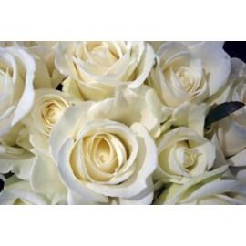 ROSE DAMASCENA flower